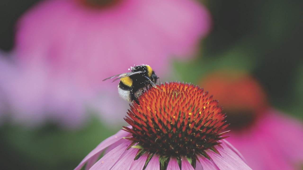 Go spot bees, flowers and wildlife in Devon with an all terrain mobility scooter.