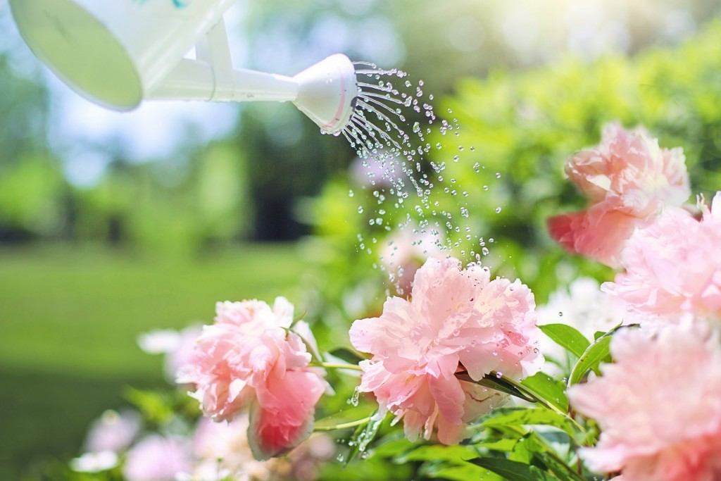 Watering can pouring water on flowers