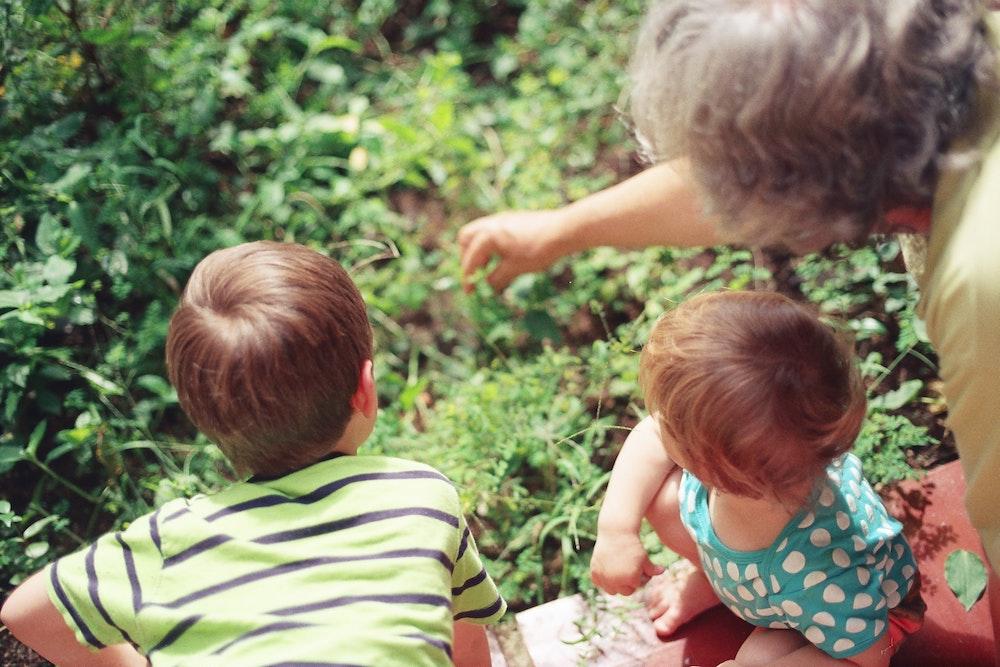 Grandparent gardening with grandchildren